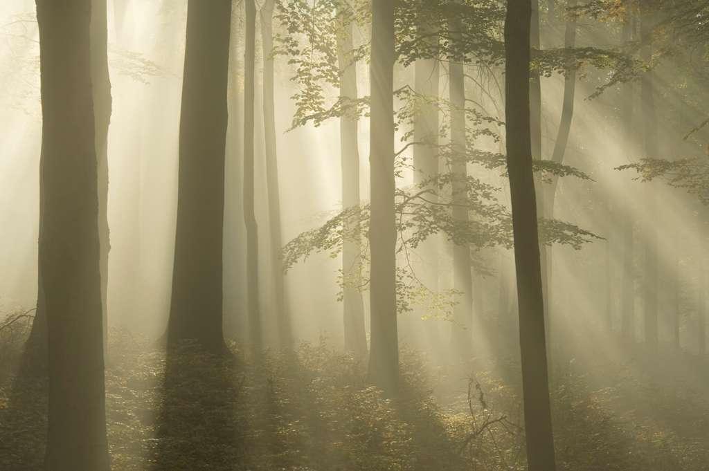 Les na Vlčí hoře